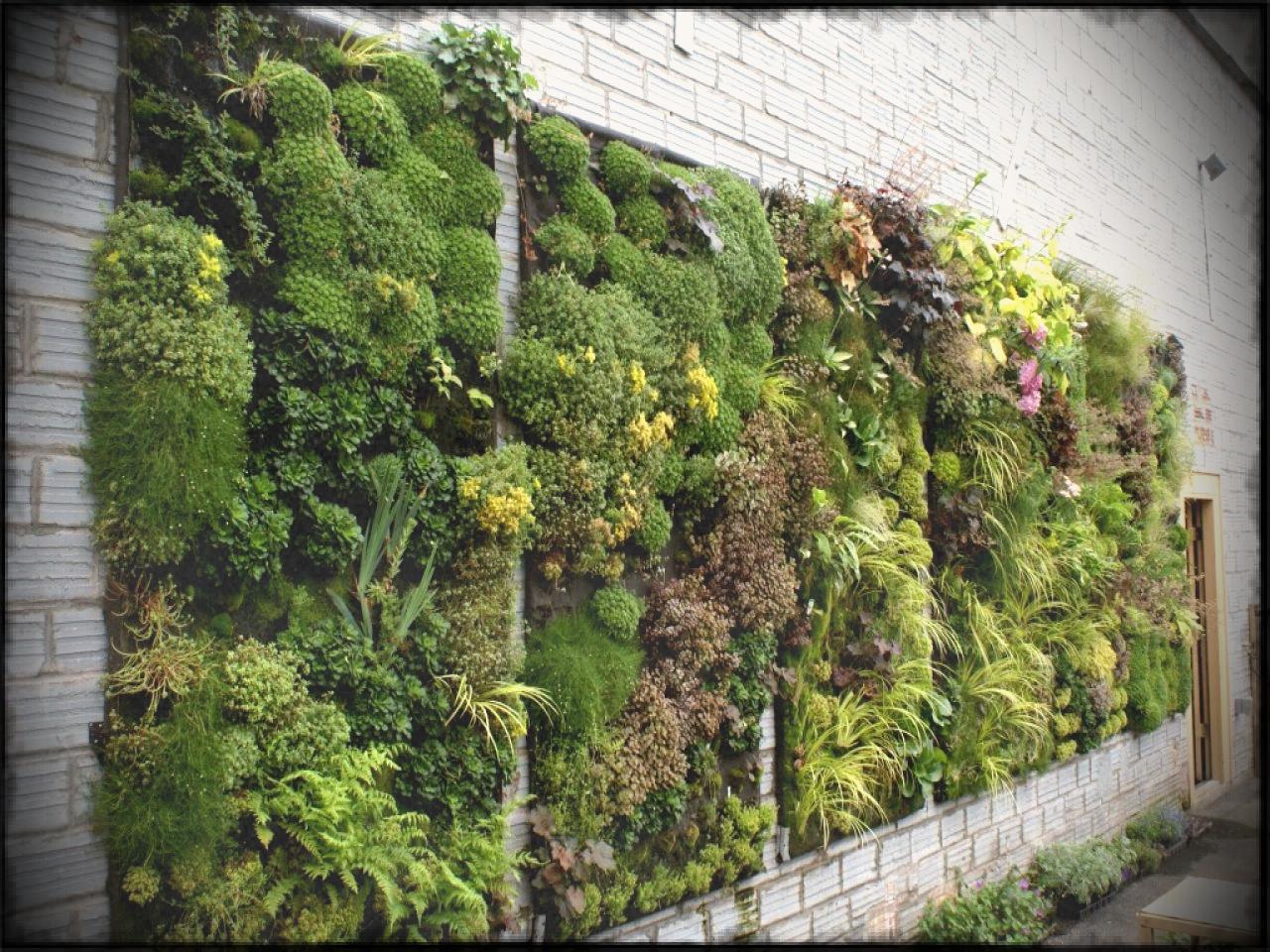 фото и схемы вертикального озеленения участка готова идти головам